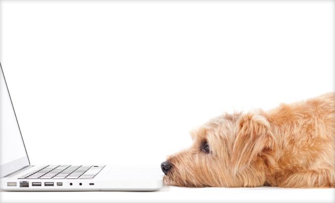 犬もフェイスブックに疲れてワンワンワン!