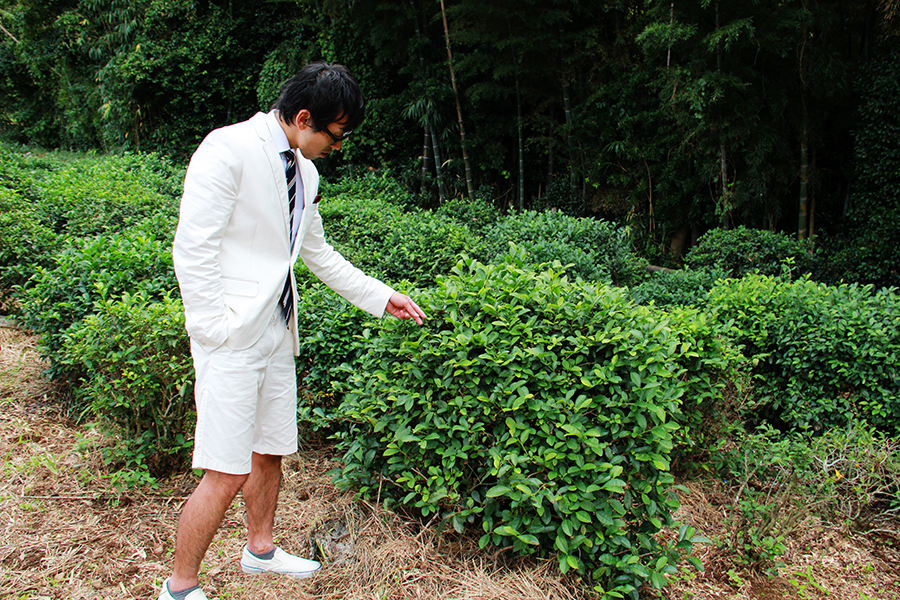 日本最初の茶畑 冨春庵の写真